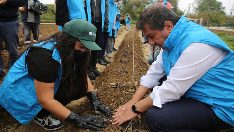 gönüllü bahçıvanlar